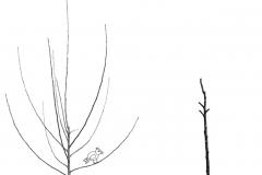 jarni-povysadbovy-rez